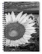 Sunflower Field Forever Bw Spiral Notebook
