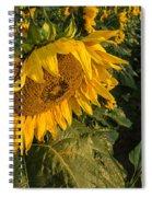 Sunflower Field Spiral Notebook