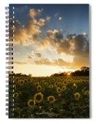 Sunflower Field Sunset Spiral Notebook