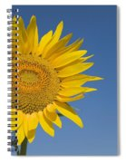 Sunflower, Helianthus Annuus Spiral Notebook