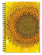 Sunflower In The Summer Sun Spiral Notebook