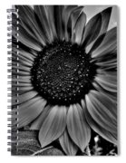 Sunflower In Black And White Spiral Notebook