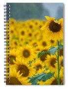 Sunflower Rain Sussex Nj Spiral Notebook