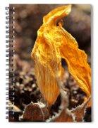 Sunflower Sunset Spiral Notebook