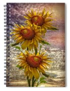 Sunflower Trio Spiral Notebook