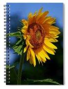 Sunflower With Honeybee Spiral Notebook