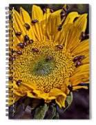 Sunflower With Ladybugs Spiral Notebook