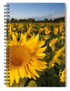 Sunflowers At Dawn Spiral Notebook