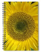 Sunflower's Cluster Spiral Notebook
