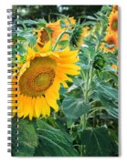 Sunflowers For Wishes Spiral Notebook
