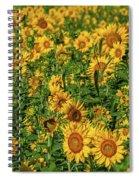 Sunflowers Helianthus Annuus Growing Spiral Notebook