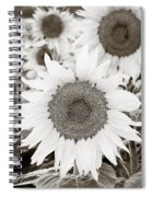Sunflowers In Back And White Spiral Notebook