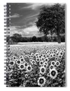 Sunflowers In Black And White Spiral Notebook