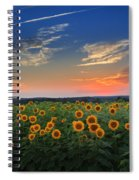 Sunflowers In The Evening Spiral Notebook