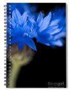 Sunkissed Cornflower Spiral Notebook