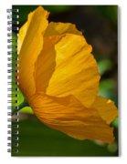 Sunkissed Poppy Spiral Notebook