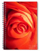 Sunkissed Orange Rose 11 Spiral Notebook