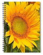 Sunkissed Sunflower Spiral Notebook