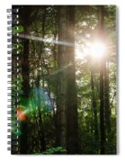 Sunlight Forest Spiral Notebook