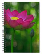 Sunlight On Lotus Flower Spiral Notebook