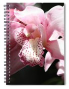 Sunlight On Pink Orchid Spiral Notebook