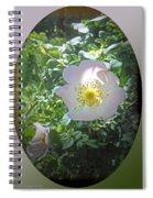 Sunlight On The Wild Pink Rose Spiral Notebook