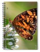 Sunlight Through Butterfly Wings Spiral Notebook
