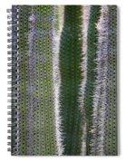 Sunlight Through Cacti Spiral Notebook