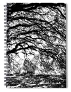 Sunlight Through Spanish Oak Tree - Black And White Spiral Notebook
