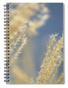 Sunlit Adagio Spiral Notebook