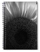 Sunlit Bw Spiral Notebook