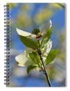 Sunlit Dogwood Blossoms Spiral Notebook
