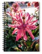 Sunlit Fancy Pink Columbine Spiral Notebook