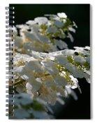 Sunlit Hydrangeas Spiral Notebook