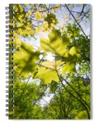 Sunlit Leaves Spiral Notebook