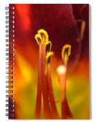 Sunlit Lily Spiral Notebook