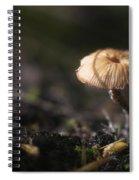 Sunlit Mushroom Spiral Notebook