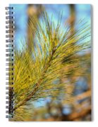 Sunlit Pine Leaders Spiral Notebook