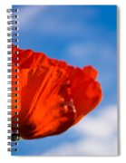 Sunlit Poppy Spiral Notebook