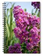 Sunlit Purple Crepe Mertle Spiral Notebook