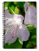 Sunlit Rhododendrons Spiral Notebook