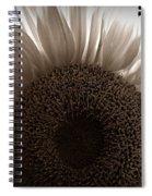 Sunlit Sepia Spiral Notebook