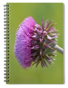 Sunlit Thistle Spiral Notebook