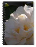 Sunlit White Camelia 2013 Spiral Notebook