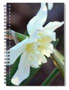 Sunlit White Daffodil Spiral Notebook