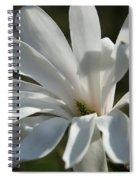 Sunlit White Magnolia Spiral Notebook