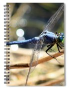 Sunning Blue Dragonfly Square Spiral Notebook
