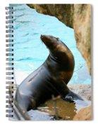 Sunning Sea Lion Spiral Notebook