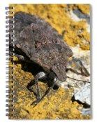 Sunning Stinkbug Spiral Notebook