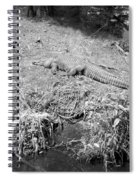 Sunny Gator Black And White Spiral Notebook
